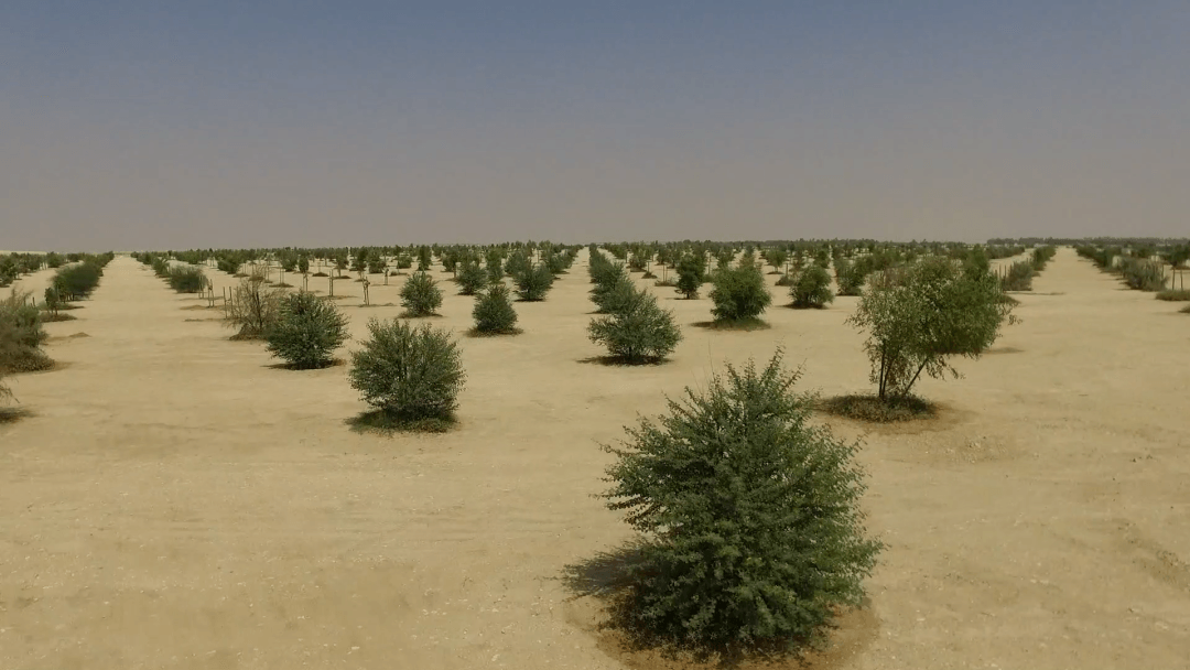 biggest-man-made-forest-is-almost-finished-in-qatar